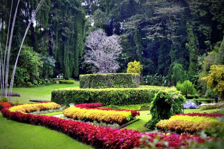 Фото і опис: Ботанічні сади Таунсвілла