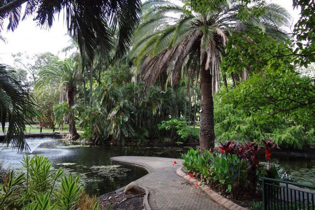 18637 Фото і опис: Ботанічний Сад Брісбена