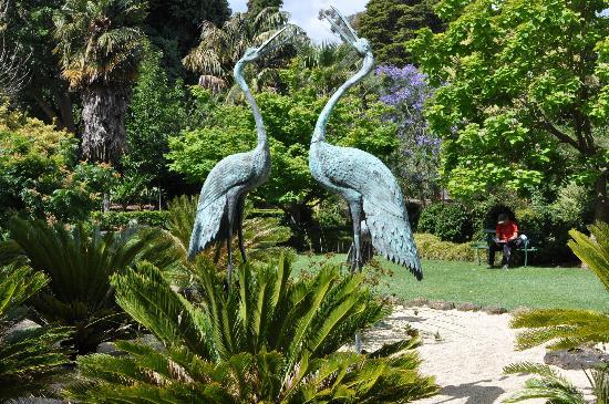 Фото і опис: Ботанічний сад Джилонге