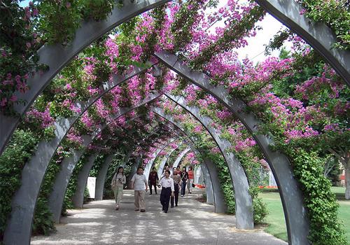 Фото і опис: Міські Ботанічні сади Брісбена