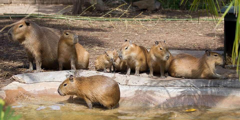 Фото і опис: Зоопарк Аделаїди
