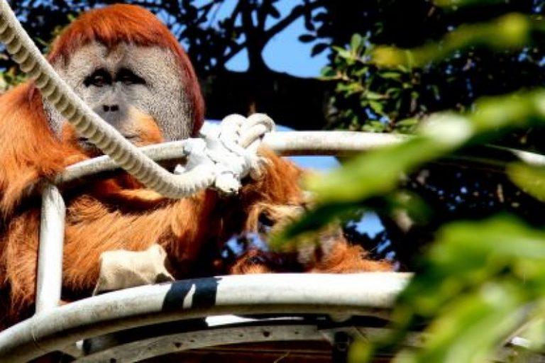 Фото і опис: Зоопарк Перта