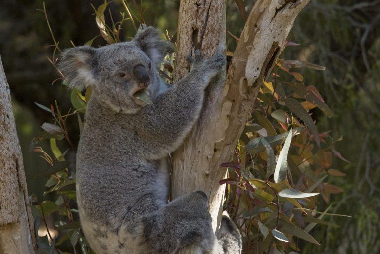 20071 Фото і опис: Зоопарк Перта