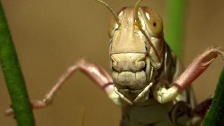 23150 В Швейцарії узаконили їжу комах
