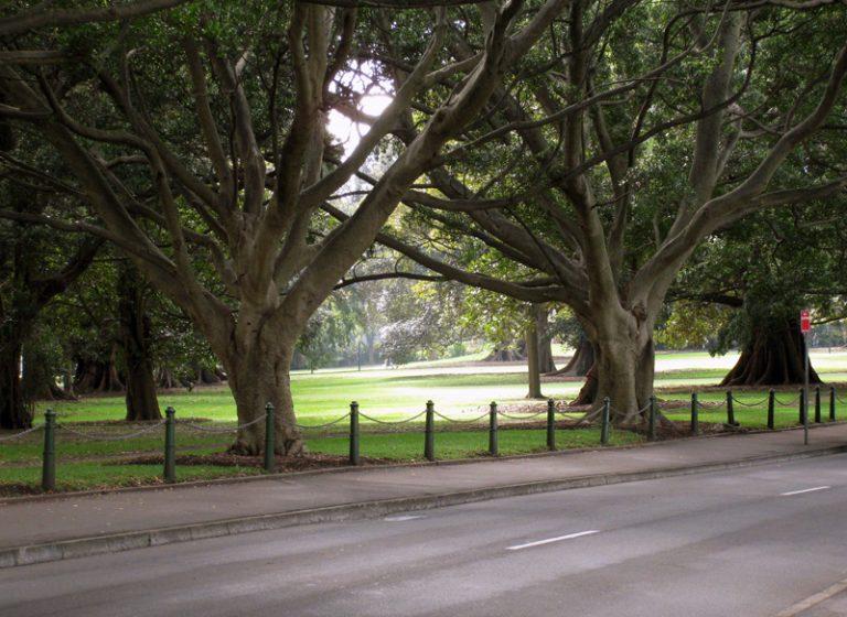 Фото і опис: Парк «Domain»
