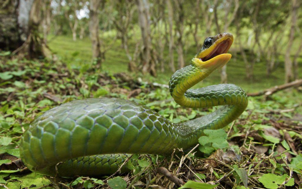 """25493 Фото і опис: Парк дикої природи """"Rainforest Habitat"""""""