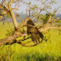 25501 Фото і опис: Парк дикої природи «Дикий Світ»