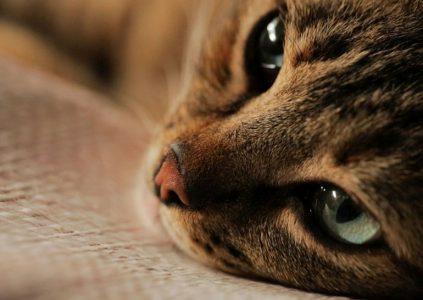 29847 Kedi / «Місто котів»