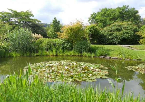 Фото і опис: Ботанічний сад Лінца