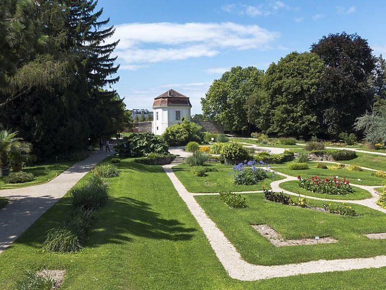 Фото і опис: Ботанічний сад Віденського університету