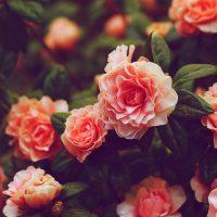 37652 Любви и счастья желаю тебе