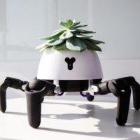 38810 Милий робот «вигулює» домашні рослини на сонці (7 фото)