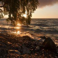 41450 Євген Маланюк – Під чужим небом
