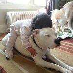 43593 20 трогательных фотографий о безусловной любви домашних животных