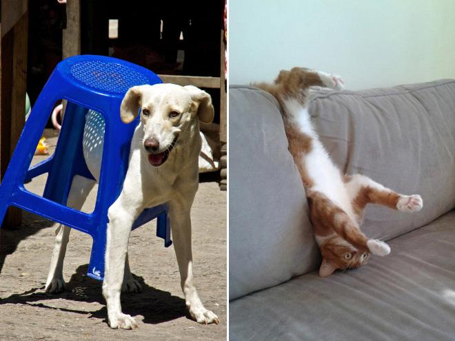 Застрявшие домашние животные, которые делают вид, что все в порядке... 18 фото