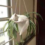 43358 Для сна нет преград: 30 фото котов, которые это доказали
