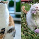 44238 10 обязанностей любого кота