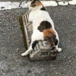 44475 Кошки в Японии используют парковочные барьеры как подушки, и это выглядит очень забавно