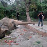 45882 Шер врятувала найсамотнішого в світі слона