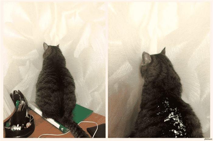 46546 12 примеров того, как выглядит настоящая кошачья обида