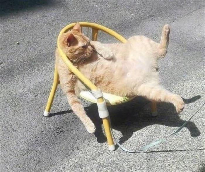 46644 13 смешных мини-историй в картинках про котиков
