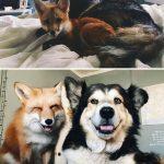 46725 30 трогательных фото «До и После» животных, которые выросли вместе
